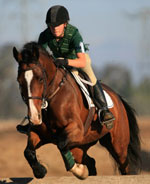 Mental coaching for equestrians